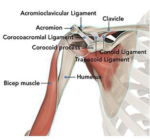 Image result for image of normal shoulder anatomy