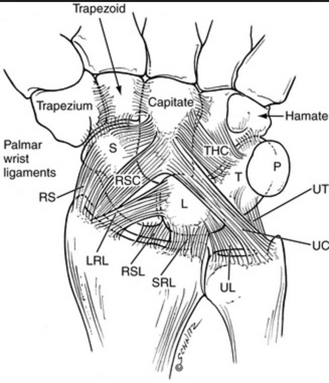 Image result for picture of extrinsic wrist ligaments