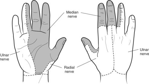 Image result for sensation for median nerve at hand image